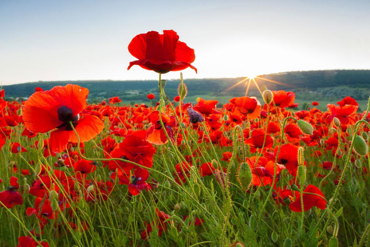 Vigil for Peace – Reclaiming ArmisticeDay